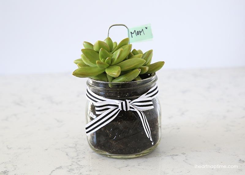 Easy-DIY-succlent-gift-idea