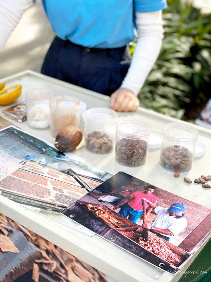 table with photographs, cacao pod, clear containers of chocolate pieces and powder.