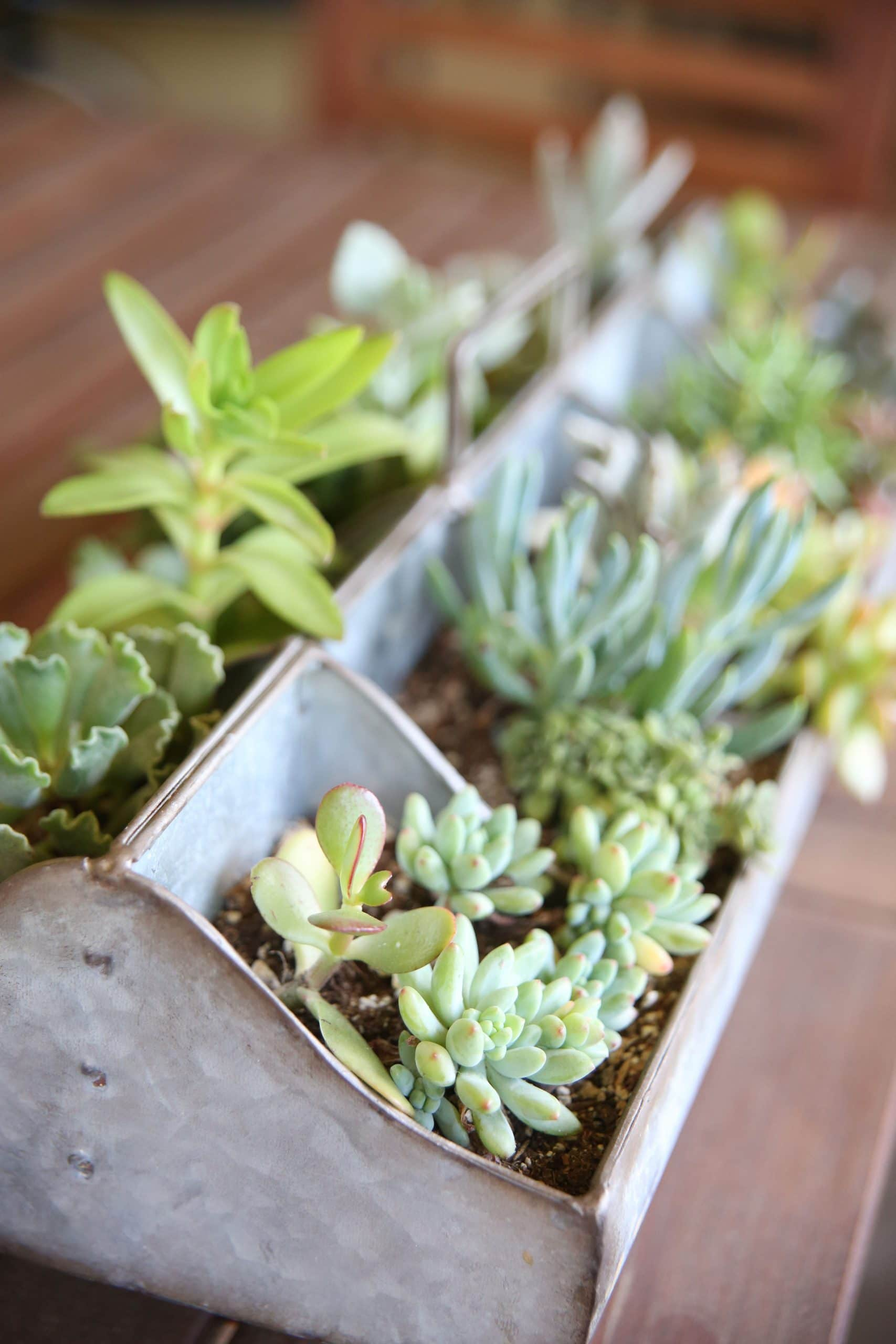 variety of small succulents planted in a tabletop stainless steel rectangular planter
