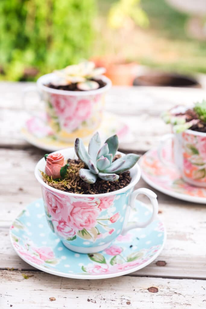 succulents planted in blue, orange, and yellow floral polka dot teacups